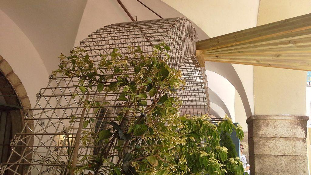 Arco con piante rampicanti