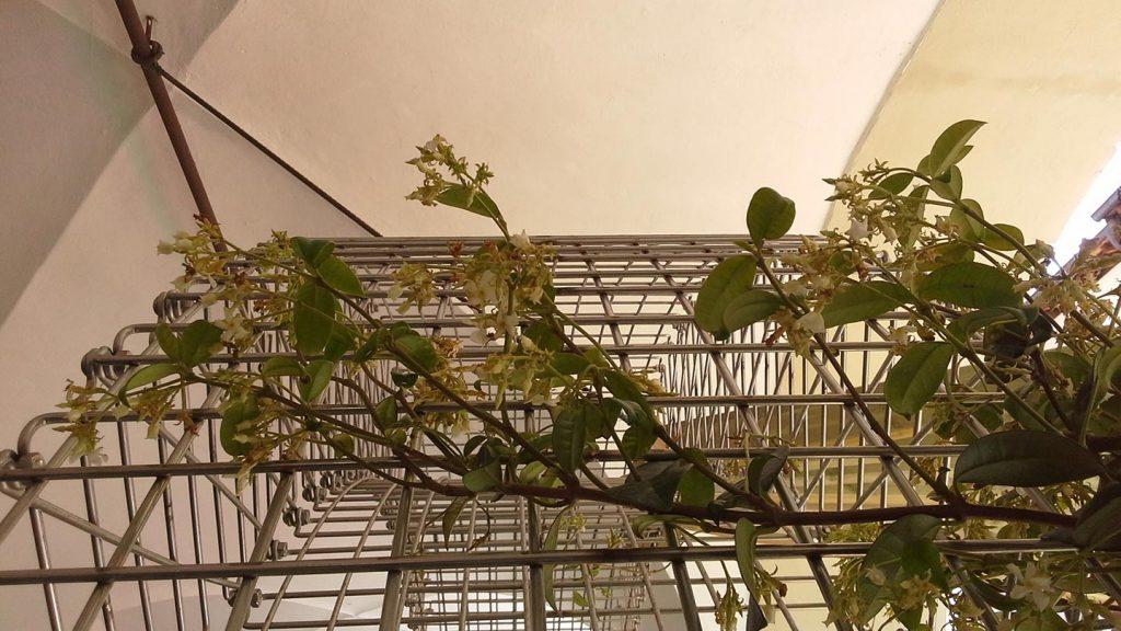 Particolare arco con piante rampicanti